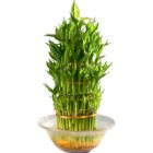 Attention-Getting 3 Tier Bamboo Plant in Bowl with Flourishing Moments