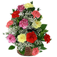 Pretty Basket with 15 Assorted Carnations