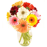 Expressive Love Assorted 12 Gerberas with Free Vase