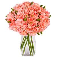 Classic 12 Pink Carnation with Free Vase