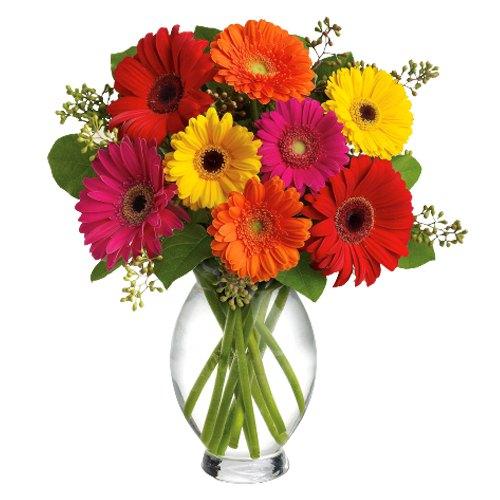 Joyous Bloom Mix