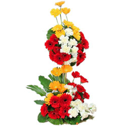 Classic Long Arrangement of Multi-color Gerberas
