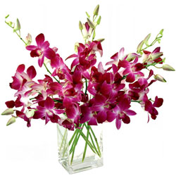 Brilliant Glass Vase Arrangement of Orchids