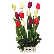 Long Lasting – Colourful Tulips