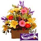 Elegant Assorted Blooms Bundle with Cadburys Dairy Milk Chocolate