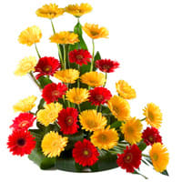 Book Mixed Gerberas Arrangement Online