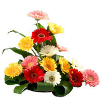 Order Online Bouquet of Assorted Gerberas