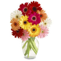 Order Gift of Mixed Gerberas in a Glass Vase Online