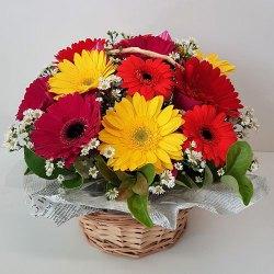 Enchanting Basket of Mixed Gerberas
