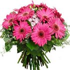 Urbane Bunch of Pink Gerberas to Jhilmil Tahirpur