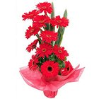Magical Assemble ofGerberas in Red Colour