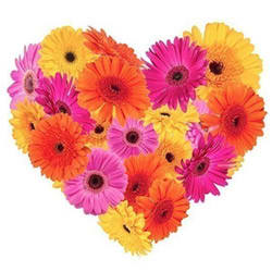 Gift Online Arrangement of Colorful Gerberas