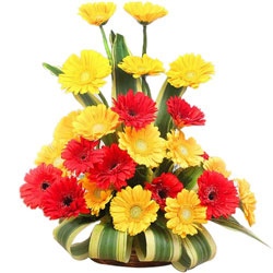 Order Arranged Red N Yellow Gerberas Online