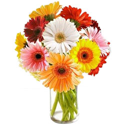 Buy Online Mixed Gerberas in a Glass Vase